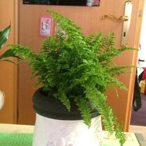 diese pflanze hier - (Pflanzen, Blumen, Gärtner)