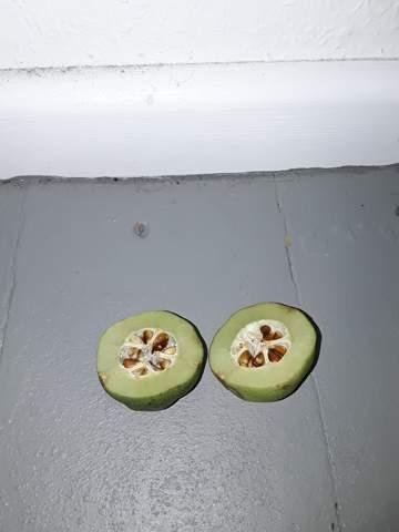 Wie heißt diese  - in Berlin wild wachsende - Frucht?