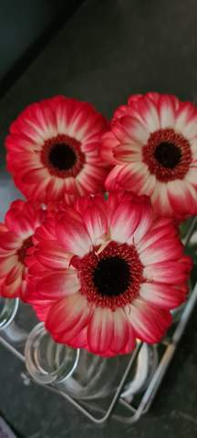Wie heißt diese Blume?