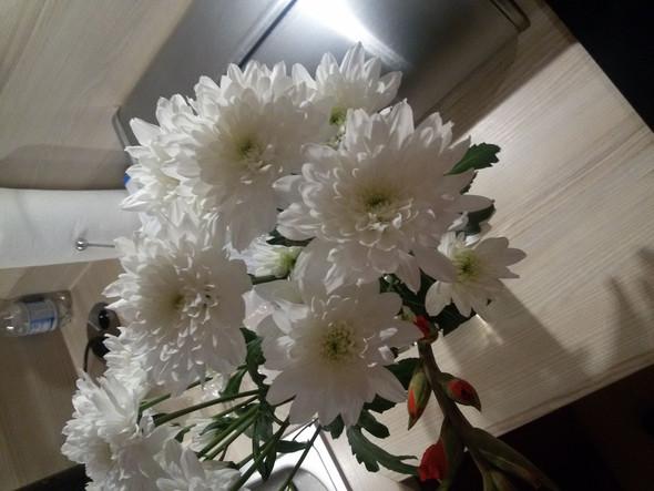 Name,bitte? - (Pflanzen, Natur, Blumen)