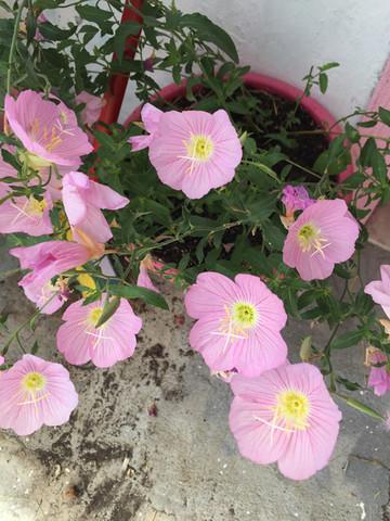 Blume - (Garten, Pflanzen, Kaninchen)