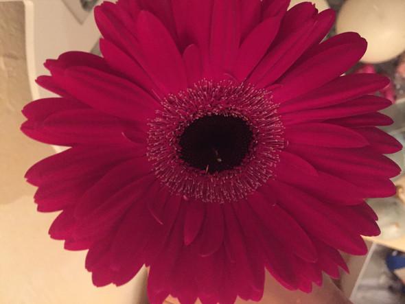 Pinke Blume - (Pflanzen, Blumen)