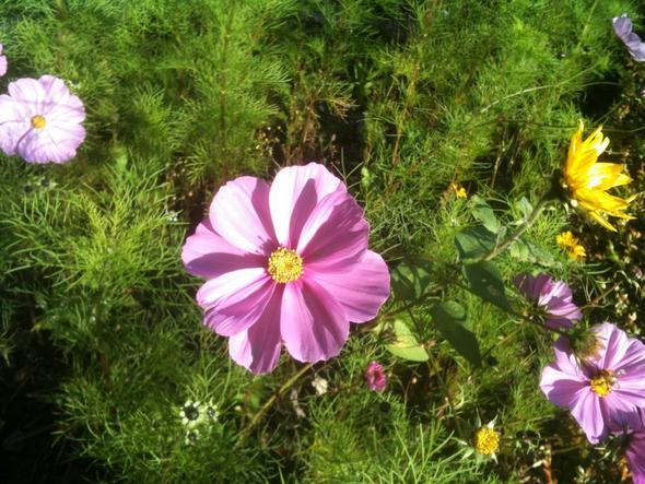 unbekannte Blume :) - (Garten, Blumen, sträucher)