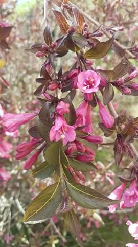 Wie heißt diese Blumenpflanze?
