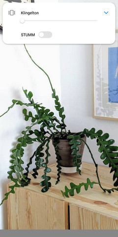 Wie heißt diese dunkelgrüne Zimmerpflanze?