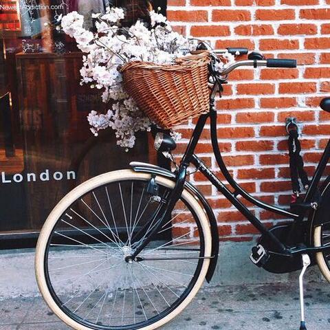 - (Fahrrad, velo)