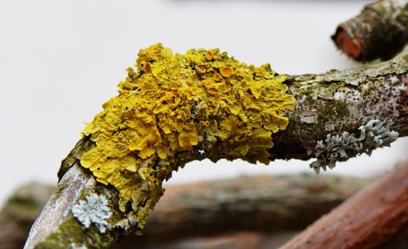 Pilz/Flechte - (Natur, Baum, Pilze)