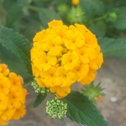 Kopf der Blume - (Blumen, Schmetterling, Bestimmung)