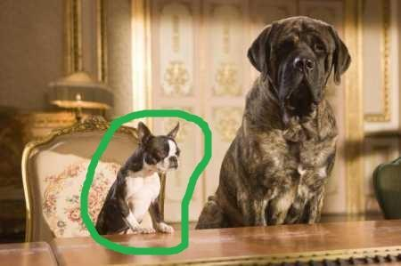 hier ist sie :D - (Film, Tiere, Hund)