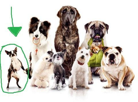 und hier - (Film, Tiere, Hund)
