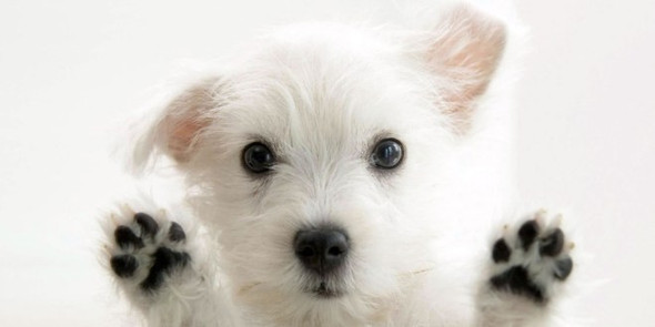 Wie heißt diese Hunderasse? - (Hund, Hunderasse)