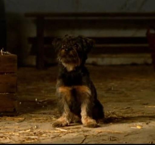 Dieser Hund - (Hund, Filme und Serien, Hunderasse)