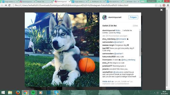 Das ist der Hund - (Hund, Rasse)