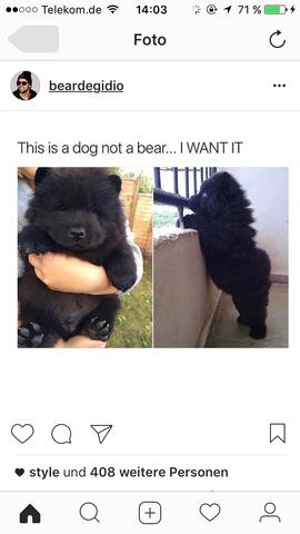 Wie heißt diese Hunderasse die aussieht wie ein Bär?