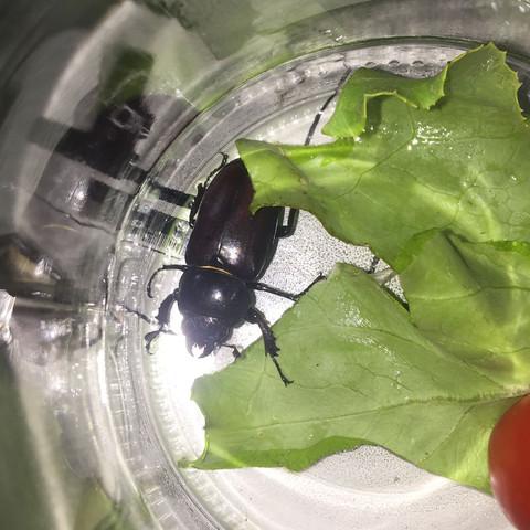 Der Käfer  - (Insekten, Kaefer, Käferart)