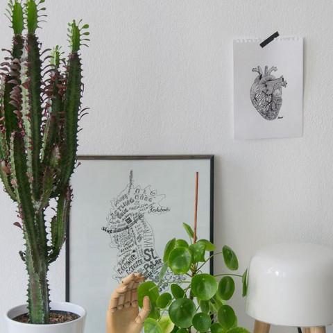 Kaktus - (Pflanzen, kaktus, Kakteen)