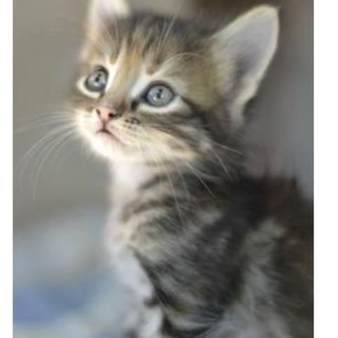 Das ist die Katze  - (Katze, Katzen, grau)