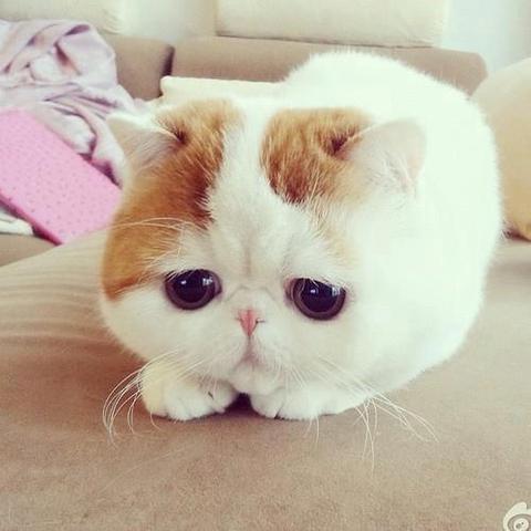 Katze - (Foto, Katze, Name)