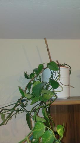 Die gesuchte Pflanze - (Pflanzen, Botanik)