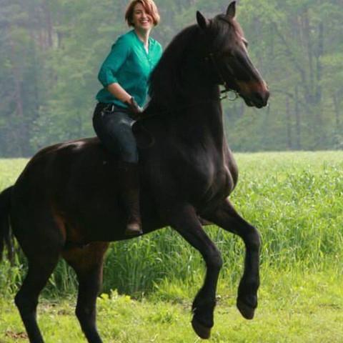 Pferd - (Tiere, Pferde, Reiten)