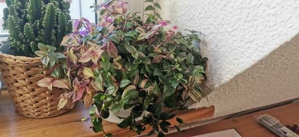Wie heißt diese Pflanze?