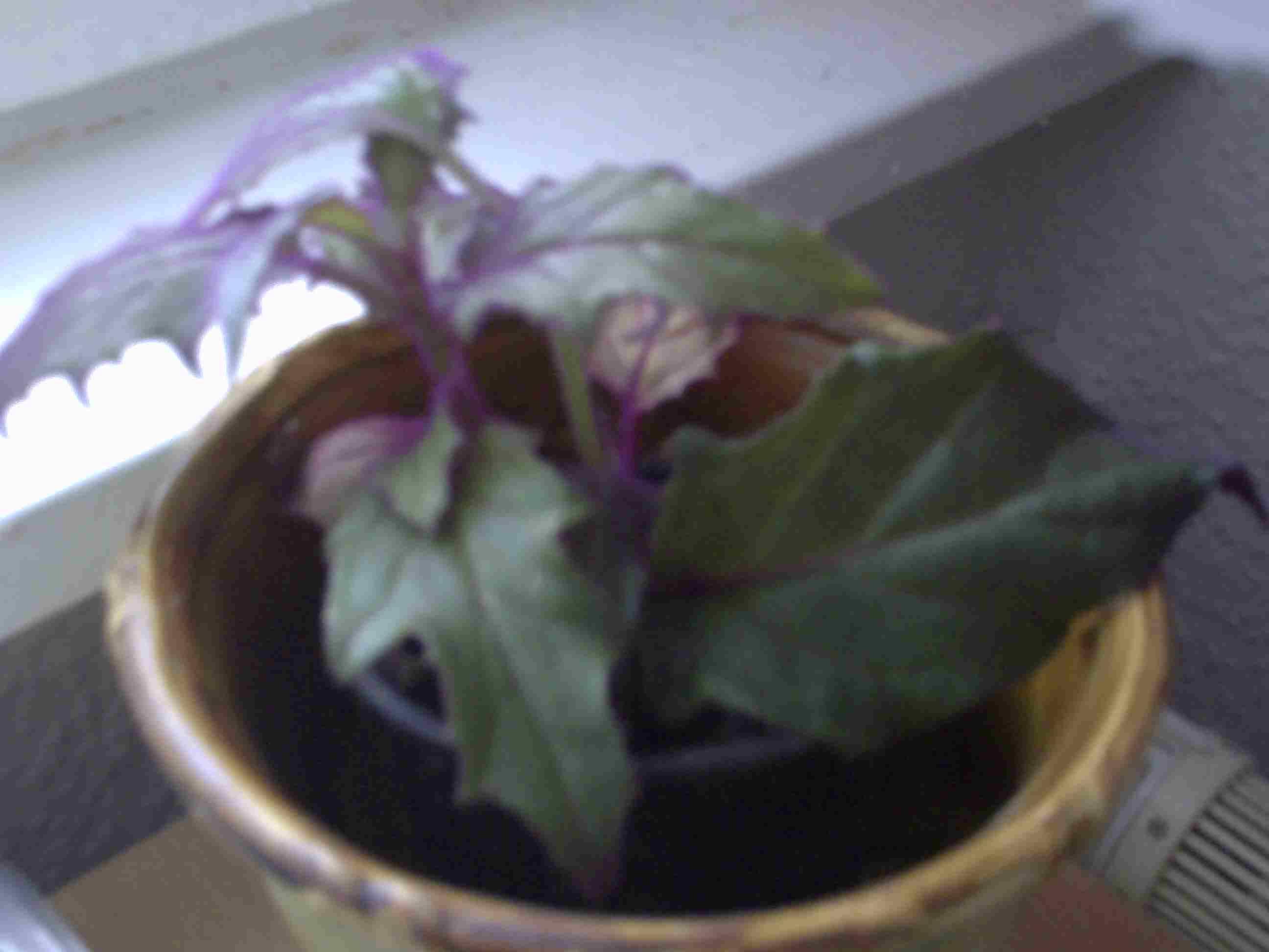 Wie heißt diese pflanze auf foto, sie braucht welche pflege, wird ...