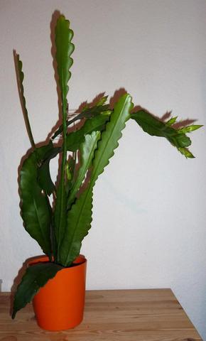 wie hei t diese pflanze danke garten pflanzen pflanzenname. Black Bedroom Furniture Sets. Home Design Ideas