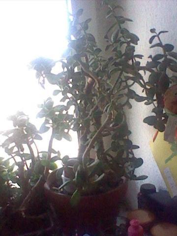 Pflanze - (Name, Pflanzen, Blüten)