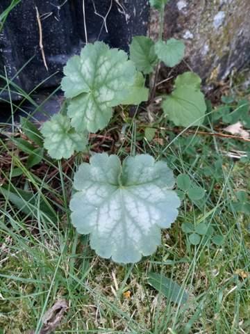 Wie heißt diese Pflanze, die in meinem Garten wächst?