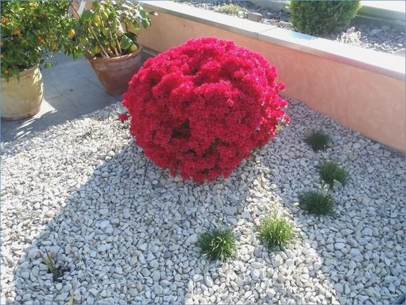 Welche pflanzen eignen sich f r einen steingarten ostseesuche com - Welche pflanzen eignen sich fur einen steingarten ...