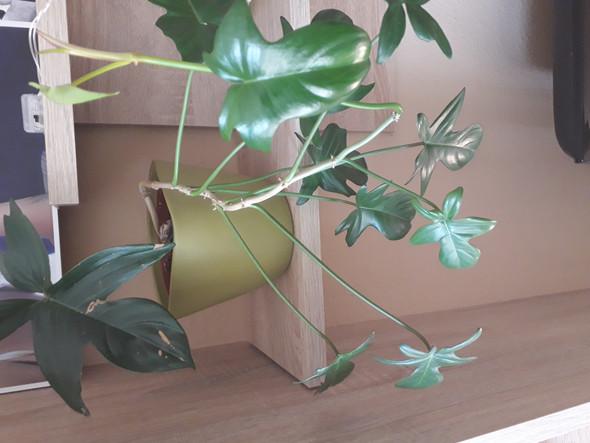 Wie heißt diese Pflanze genau?