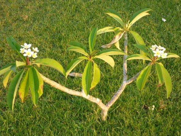 Wie heißt diese Pflanze? Hab sie auf Kreta fotografiert...