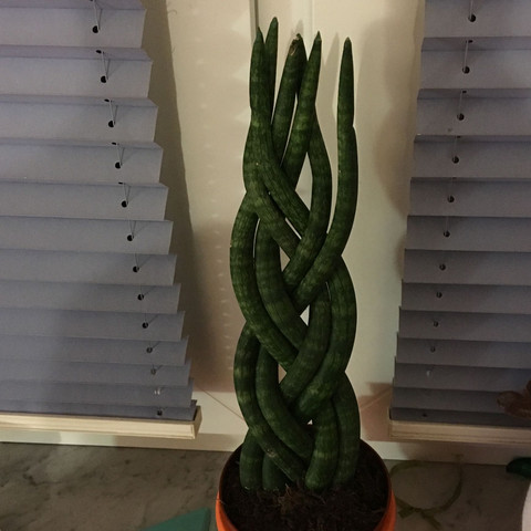Pflanze - (Pflanzen, Blumen, Art)