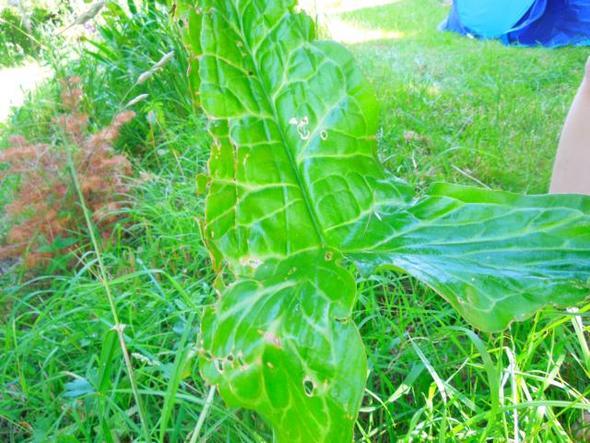 Blatt - (Name, Pflanzen, giftig)