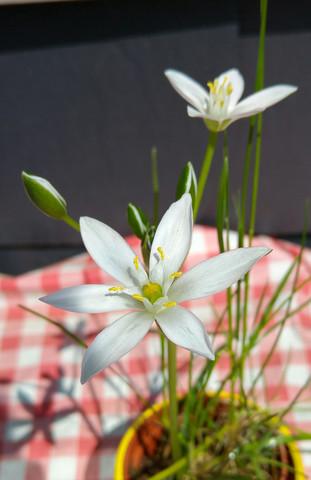 Hier ein Bild von der Pflanze - (Garten, Pflanzen, Natur)