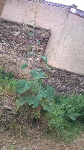 Unbekannte Pflanze??  - (Pflanzen, Botanik)