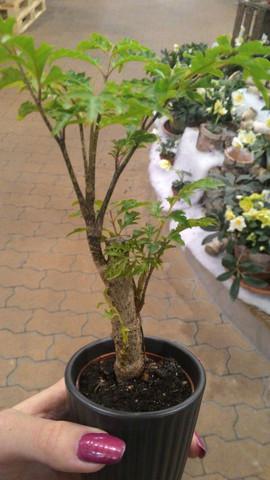 Pflanze - (Name, Pflanzen, Baum)