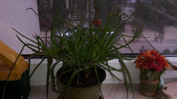 Pflanze mit Blütenresten - (Pflanzen, Botanik, Pflanzenpflege)