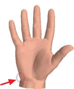 Menschliche Hand - (Anatomie, Handballen, Menschliche Hand)