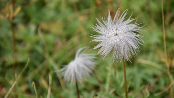 Wie heisst diese weisse Blume? (Name, Natur, Blumen)