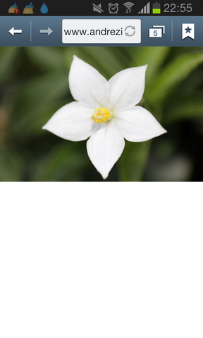 Tolle Weiße Blumen Png Galerie - Kleider und Blumen - babytop.info