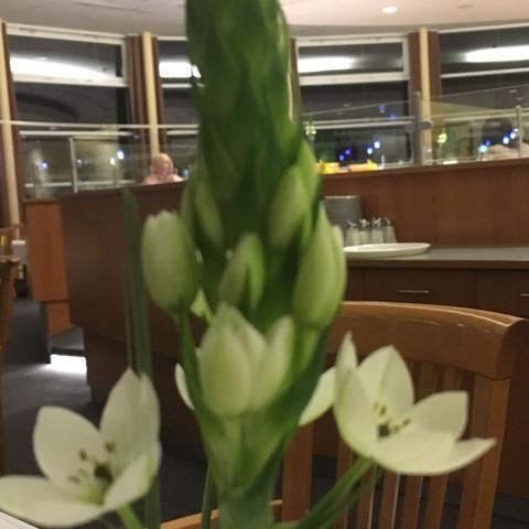 Wie heißt diese weiße Blume?