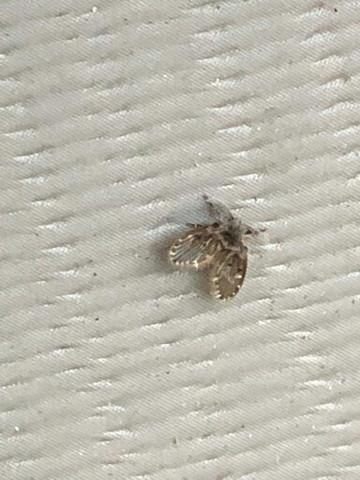 Wie heißt diese winzige Motte (Bild)?