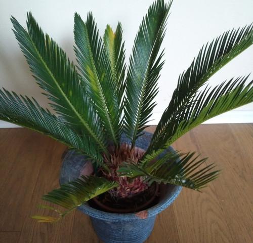 Wie heißt diese Zimmerpflanze auf dem Foto? (Pflanzen ...