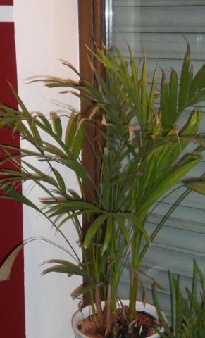 Wie heisst diese Zimmerpflanze bzw erkennt die jemand?