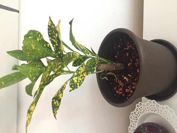 Wie heißt diese Zimmerpflanze? Stammmix?