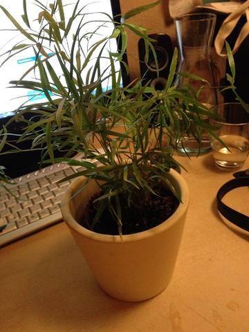 Wie Heißt Diese Zimmerpflanze Und Ist Diese Giftig Wohnung