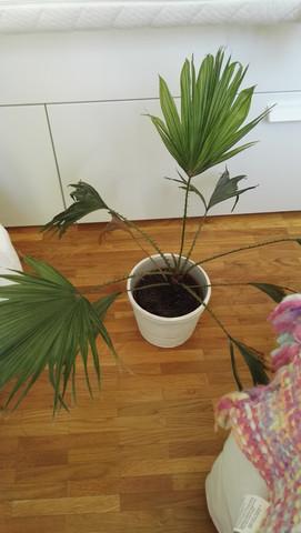 Pflanze namenlos - (Pflanzen, Zimmerpflanzen)