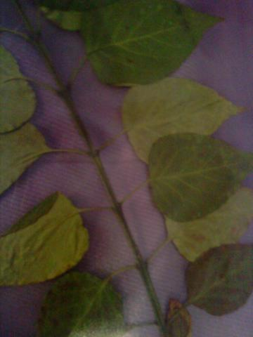 ?? - (Biologie, Pflanzen, Natur)