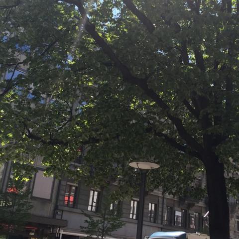 Wie heisst dieser Baum? - (Name, Baum)